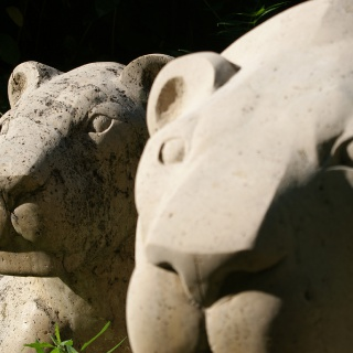 LIONS_4